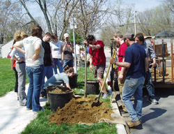 people planting tree in neighborhood