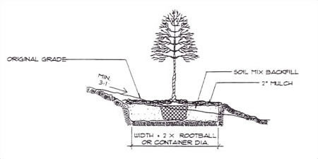 Planting on Slope Specifications