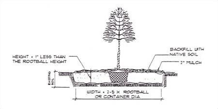 Undisturbed Soil Specifications