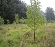 Forest planting site