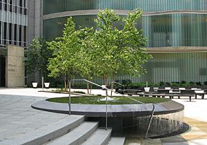 Trees in urban setting